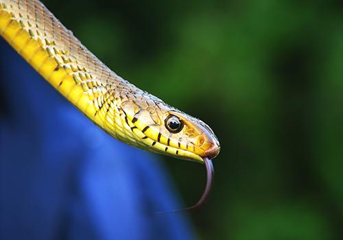 Biología -y- mantenimiento-Anfibios-y- Reptiles-seminario