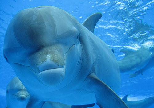 sea-wolves-seminarios-delfin-mular