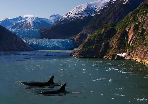 sea-wolves-seminarios-etologia-mamiferos-marinos