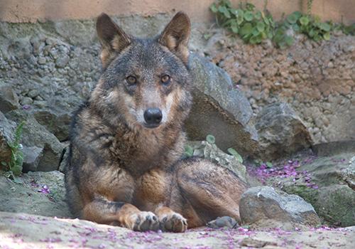 sea-wolves-seminarios_lobos