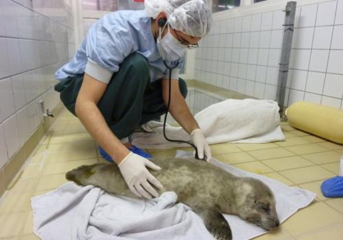 sea-wolves-seminarios-medicina-mamiferos-marinos