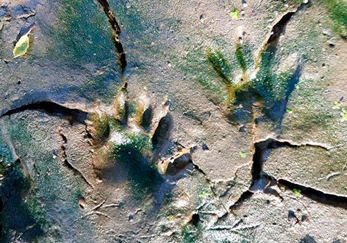 sea-wolves-seminarios-rastreo-fauna-silvestre