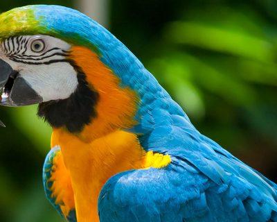 ECU aves exóticas: Especialización como cuidador de aves exóticas