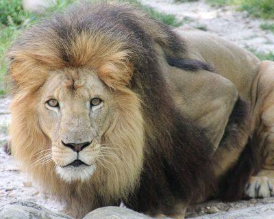 ECU carnivoros: Especialización como cuidador de mamíferos carnívoros