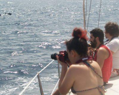 Curso teorico práctico de biología e identificacion de cetaceos