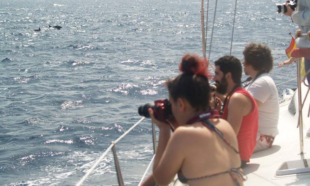 sea-wolves-cursos-cetaceos