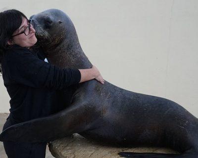 ECUMM: Especialización como cuidador de mamíferos marinos