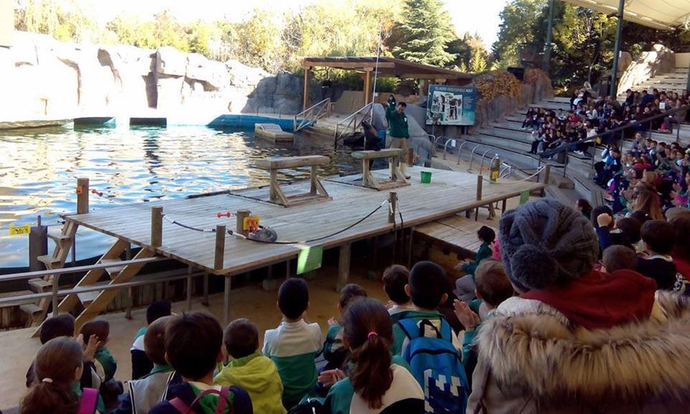 sea-wolves-cursos-educa-zoo
