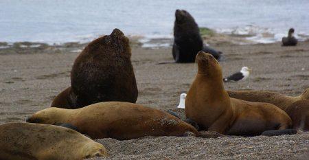 sea-wolves-cursos-patagonia