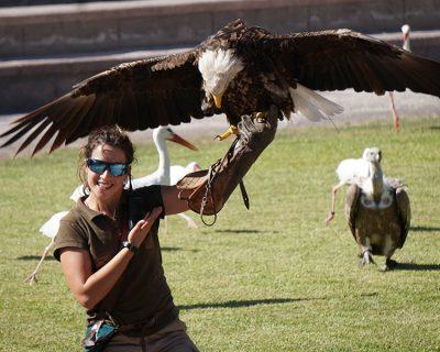 ECU rapaces: Especializacion como cuidador de aves rapaces