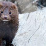 Especies-invasoras-seawolves-blog