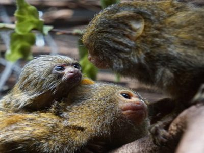 EEBA: Especialización en etología y bienestar animal
